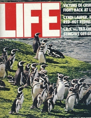 Image for Life Magazine, April, 1984 Penguins